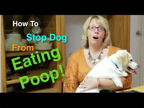 how to prevent dogs from pooping in the house how to stop dog from eating poop coprophagia the most disgusting dog and puppy habit youtube