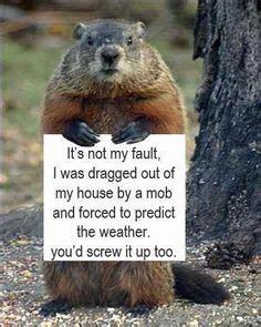 groundhog day house 1000 images about groundhog day punxsutawney phil on