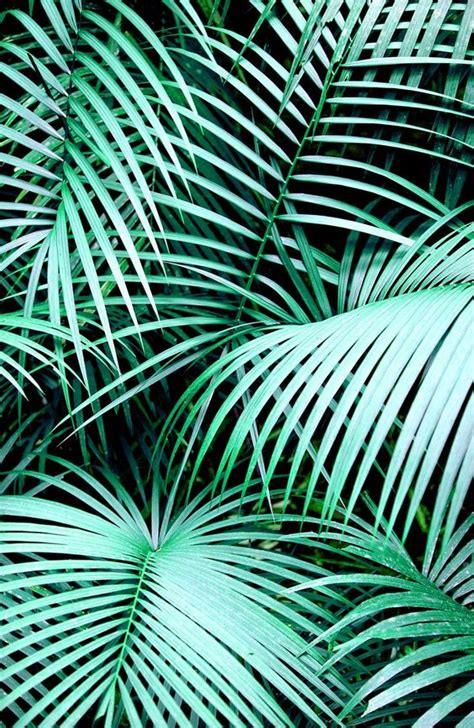 wallpaper tropical green image result for palm leaves background tumblr