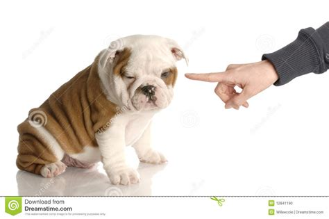 stinky puppy bad stock photo image 12841190