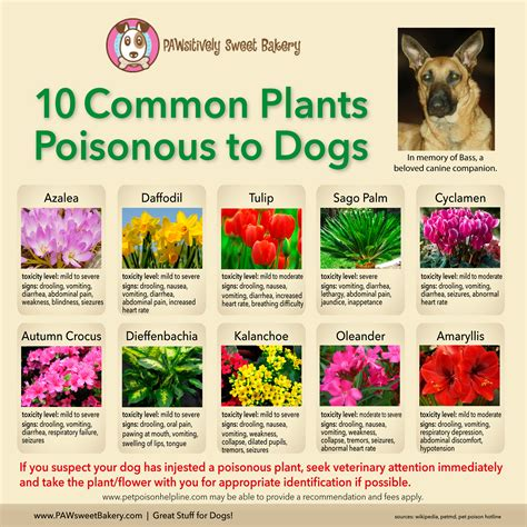 what plants are poisonous to dogs poisonous plants