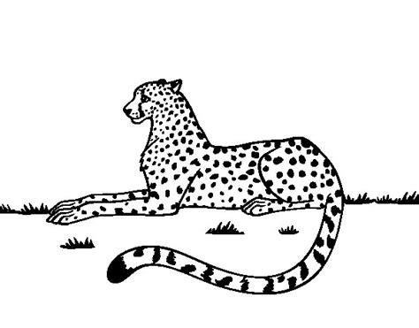 imagenes jaguar para colorear dibujo de guepardo en reposo para colorear dibujos net