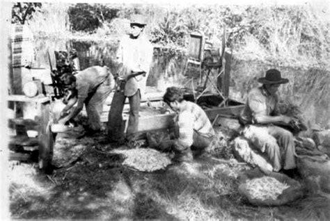 the seminole indians of florida genealogy trails happy florida memory mikasuki seminole indians preparing frog