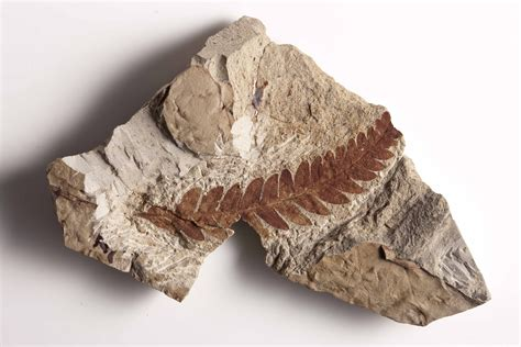 fossils help scientists build a picture of the past and