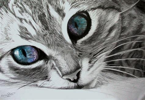 imagenes a lapiz de gatos dibujo de un gato a l 225 piz taringa