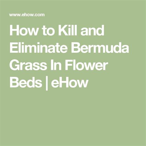 how to kill grass in flower beds 13 best front foundation plants part shade images on