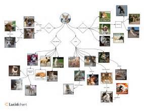 understanding doggo memes video diagram lucidchart blog