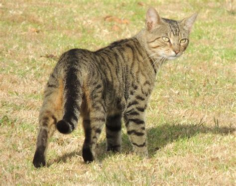 Stray Cat And Kittens In Backyard by Stray Cat In Backyard New Zealand