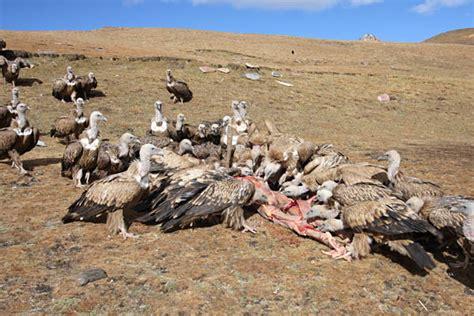 8 Weirdest Burial Rituals by 10 Rituals From Around The World