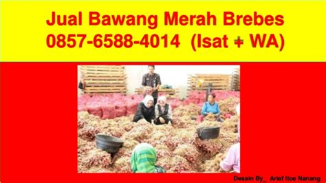 Jual Bibit Bawang Merah Brebes 0857 6588 4014 isat wa harga bawang merah brebes