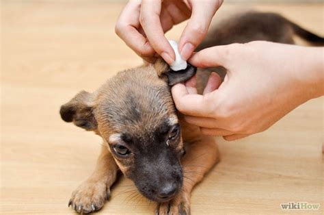 how to clean puppy ears how to clean ears yourself with hydrogen peroxide