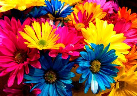 imagenes las flores significado del color de las flores mundo flores