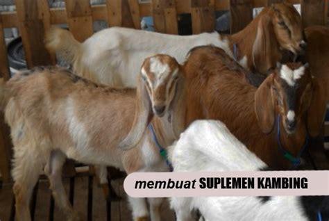 Suplemen Pakan Adalah 12 cara mudah membuat suplemen herbal hmnmo untuk ternak
