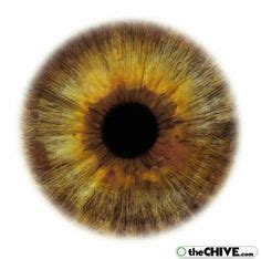 printable brown eyes 1000 images about irises on pinterest the iris human