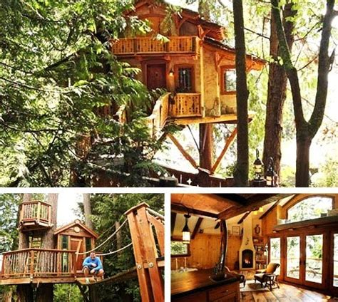 real life treehouse journey of the featherless real life treehouses