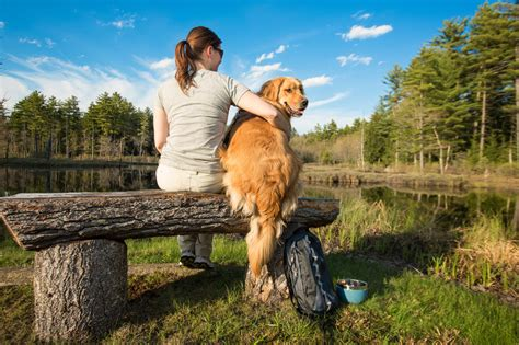 hiking dogs friendly hiking trails in massachusetts kurgo products