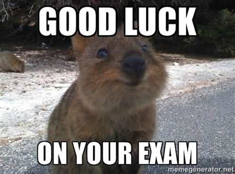 Good Luck Memes - funny good luck on your exam meme nicewishes