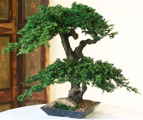 Artificial Home Decor Trees by Artificial Bonsai Trees Double Double Monterey Bonsai Tree