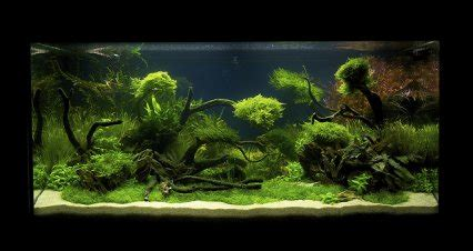 aquascaping magazine uk represented in live international aquascaping contest