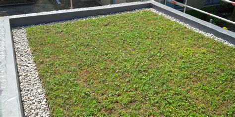 living green roof advantages green roof advantages and disadvantages
