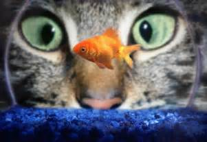 fisch le do cats eat goldfish how to stop cats from