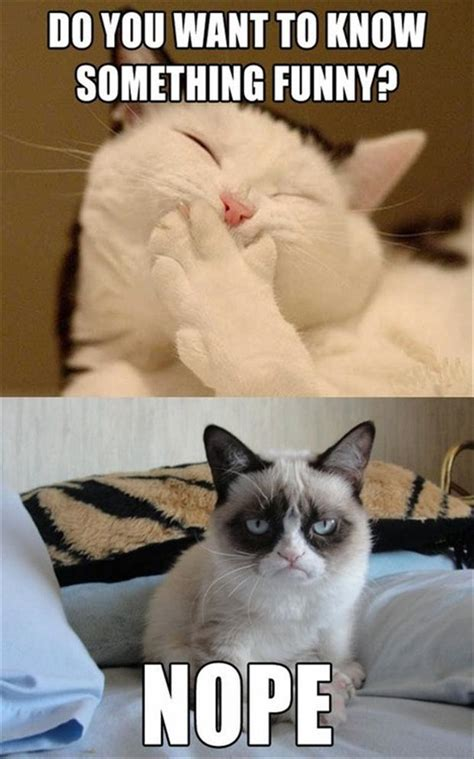 How To Make A Grumpy Cat Meme - 12 funny grumpy cat meme
