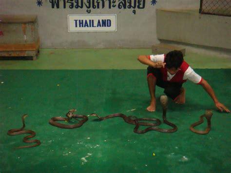 video results thai fight samui 29 04 2017 muay die top 10 aktivit 228 ten nahe conrad koh samui ko samui