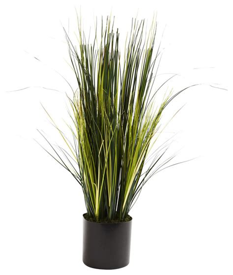 Indoor Grass Planters by Nearly 3 Grass Plant Traditional Indoor Pots And Planters By Beyond Stores