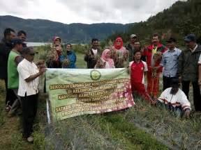 Bibit Bawang Merah Aceh rawe lut tawar hasilkan 6 7 ton bawang merah per hektar