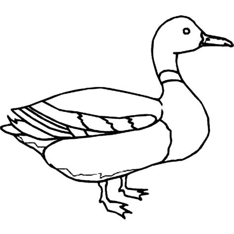 duck outline picture www pixshark com images galleries
