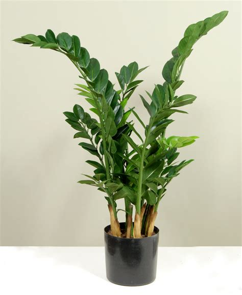 artificial plants plantforce office plants london