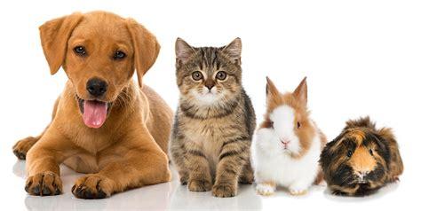 suche zuhause aus tiere suchen ein neues zuhause die sorgenkinder aus den