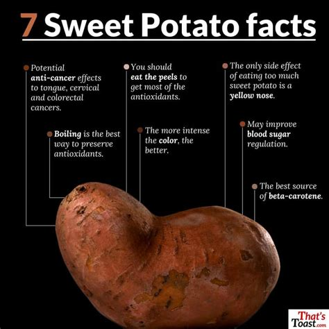 can dogs eat sweet potato skins top common prejudices about can dogs eat sweet potatoes