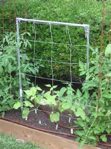 bean trellis plans gardening from the ground up may 31 2011