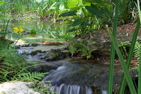 Kanapaha Botanical Garden Escape To Kanapaha Botanical Gardens In Gainesville Florida Bylandersea Travel Tales
