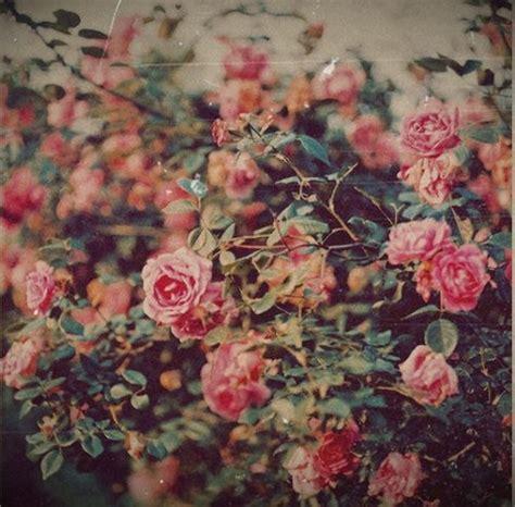 flower wallpaper tumblr quotes vintage rose on tumblr