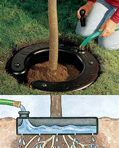 fruit tree watering system tree water ring buy from gardener s supply