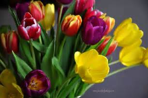 colors of tulips living colorfully lyn king