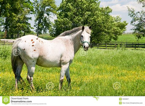 bright pasture susan cole photography white in pasture stock image image of country