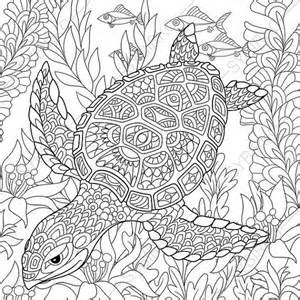 turtle coloring pages for adults coloring pages turtle zentangle doodle coloring pages