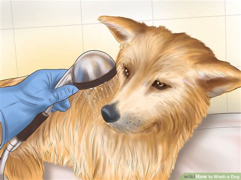 what to wash a puppy with how to wash a with pictures wikihow