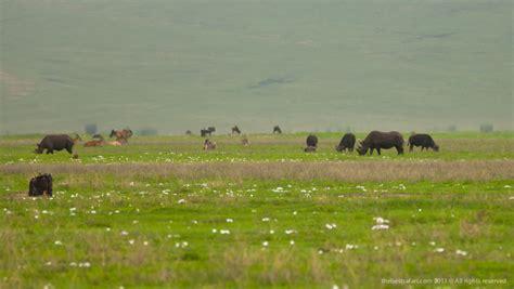 best tours contatti safari nei parchi nord alla ricerca dei quot big five quot e