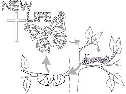 coloring page caterpillar to butterfly kid s information about new life in christ as butterfly