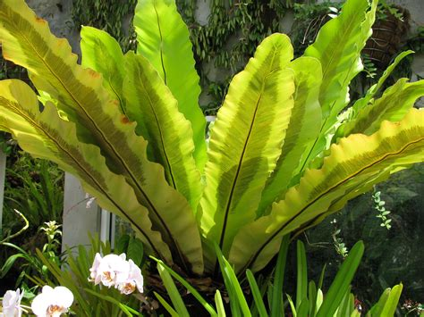 tropical ferns sub tropical ferns list pictures and