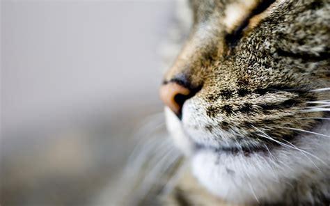 cat wallpaper for laptop 今日の壁紙 ネコの顔 ringoon pop