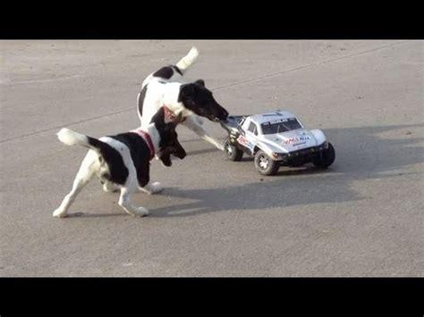 Rc Races Lamborgini Imitation r c car vs 550hp lamborghini gallardo lp 550 2 doovi