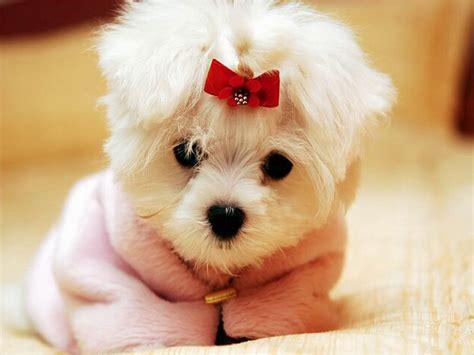 imagenes de perritos fotos de perritos tiernos quotes