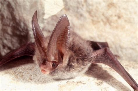 are bats dangerous in florida catseye pest control
