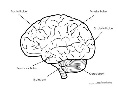 brain system print outs free diagrams wiring library