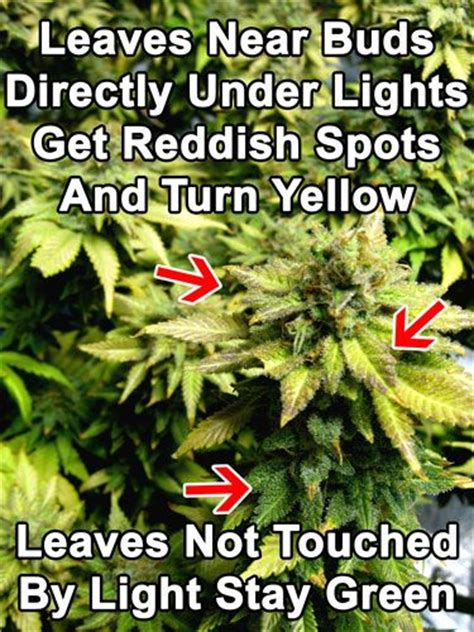 marijuana grow lights for sale 40 best cannabis problems images on pinterest growing